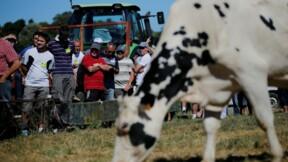 Nouvelle interruption des négociations sur le prix du lait