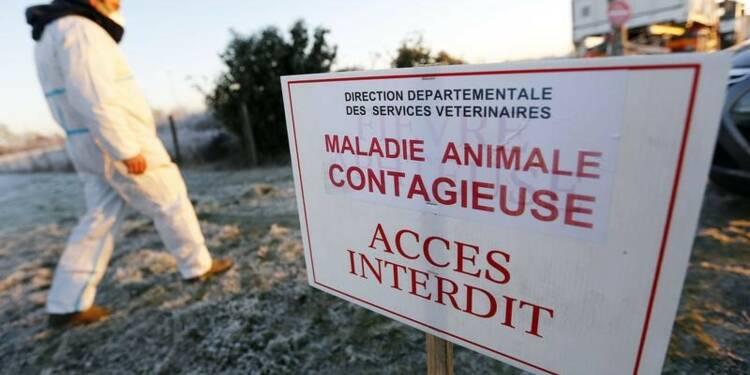 La grippe aviaire inquiète l'OMS