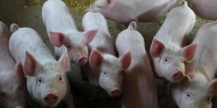 Co-entreprise franco-chinoise dans la santé animale