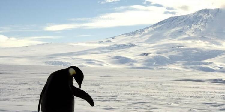 Le plus grand sanctuaire marin du monde créé en Antarctique