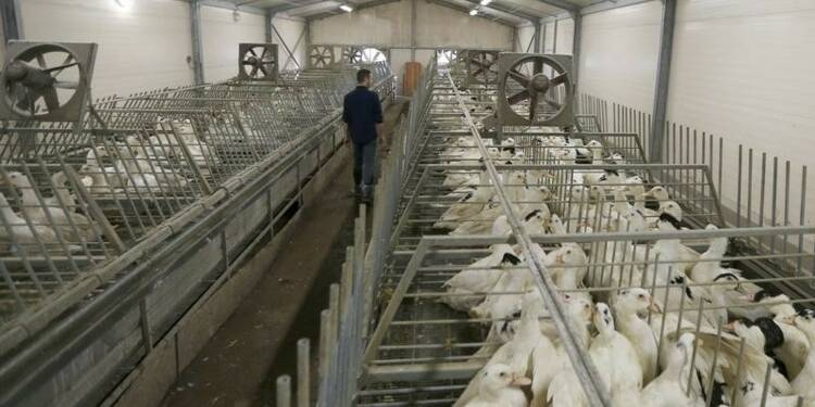 Levée de la zone de restriction contre la grippe aviaire