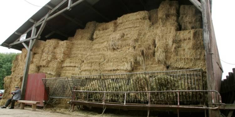 La moitié des agriculteurs auront moins de 350 euros par mois cette année