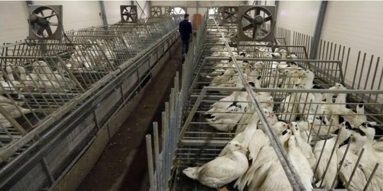 La France renforce les mesures de protection anti-grippe aviaire