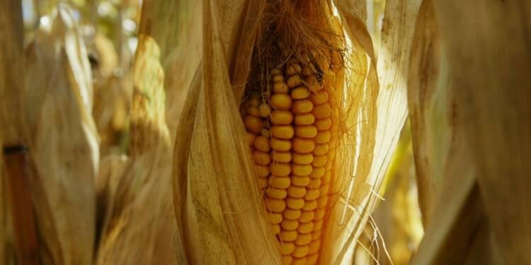 Riz, blé, maïs: les Etats-Unis attaquent la Chine à l'OMC