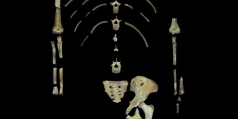 L'australopithèque Lucy peut-être morte en tombant d'un arbre