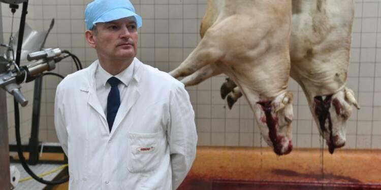 """Souffrance animale dans les abattoirs: les députés veulent lever """"l'omerta"""""""