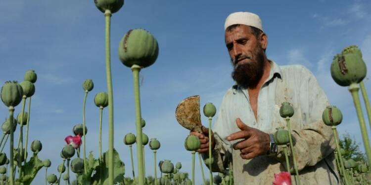 Afghanistan: la production d'opium atteint de nouveaux plafonds