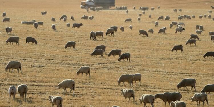 Une transformation profonde de l'agriculture nécessaire face au réchauffement (FAO)