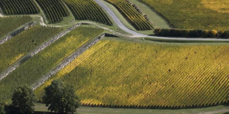 Deux châteaux viticoles mis en examen pour des épandages