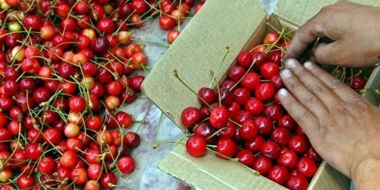 Paris interdit l'importation de cerises traitées au diméthoate