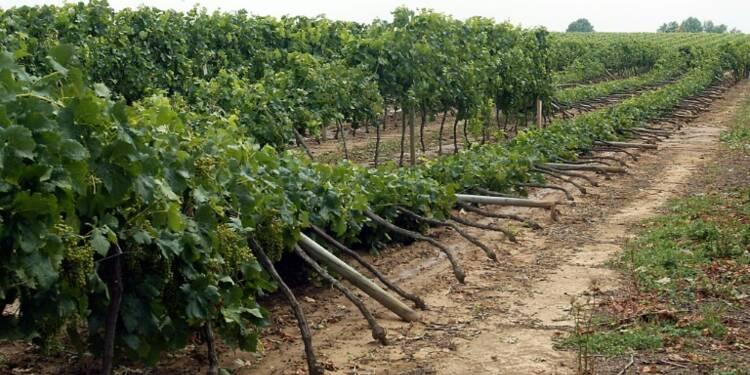 Grêle sur les vignobles: l'Etat évalue les dégâts