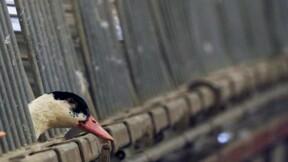 Réunion ministérielle avec la filière avicole du Sud-Ouest mardi