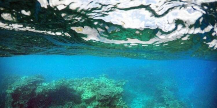 La moitié des sites du Patrimoine mondial menacés, selon WWF