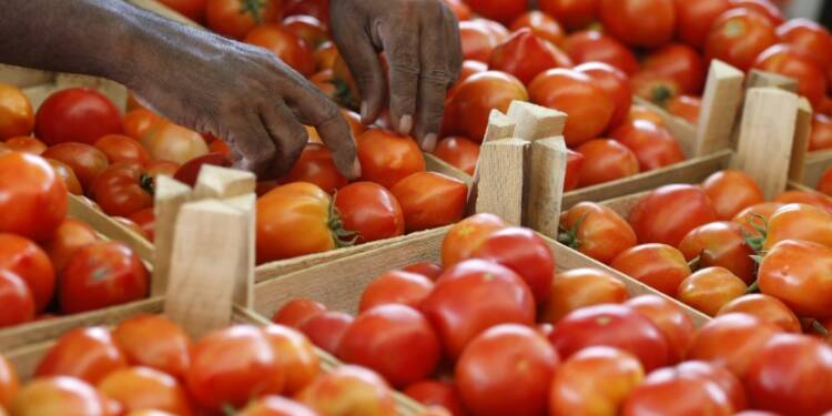 Bretagne contre Sud-Est, la guerre des tomates