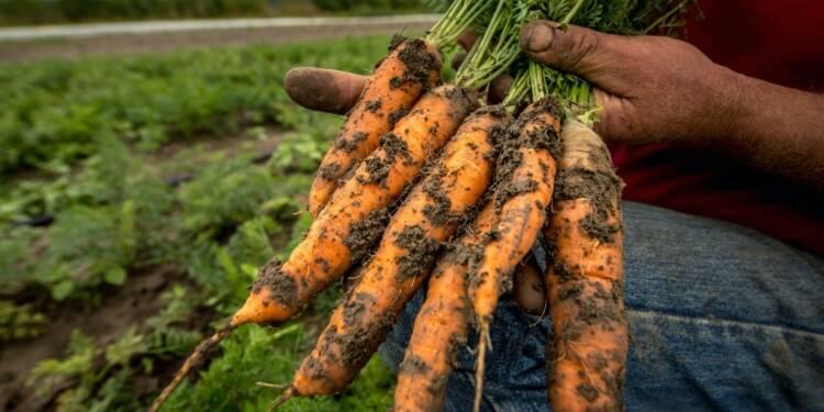 """L'agriculture bio, """"pas que pour les bobos"""", mais attention aux dérives"""