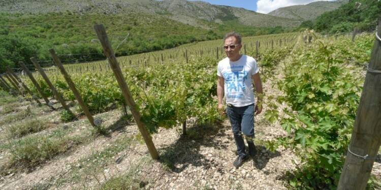 Le pecorino, le vin blanc star italien revenu d'entre les morts