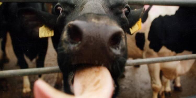 Scandales alimentaires : du pain au talc à la viande de cheval…