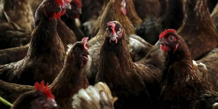 Huit pays suspendent leurs importations de volaille française
