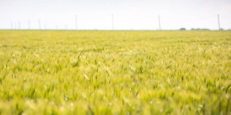 Le blé, l'un des joyaux de l'agriculture française en pleine déconfiture