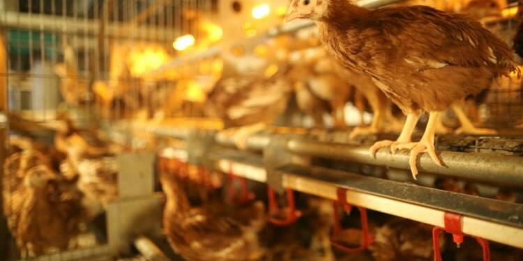 Ryad suspend l'importation de volaille et d'oeufs français