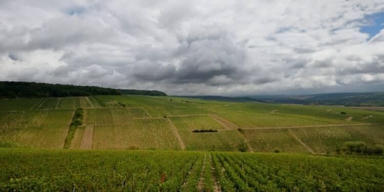 Désolation dans des vignes de l'Est et du Sud-Ouest après la grêle
