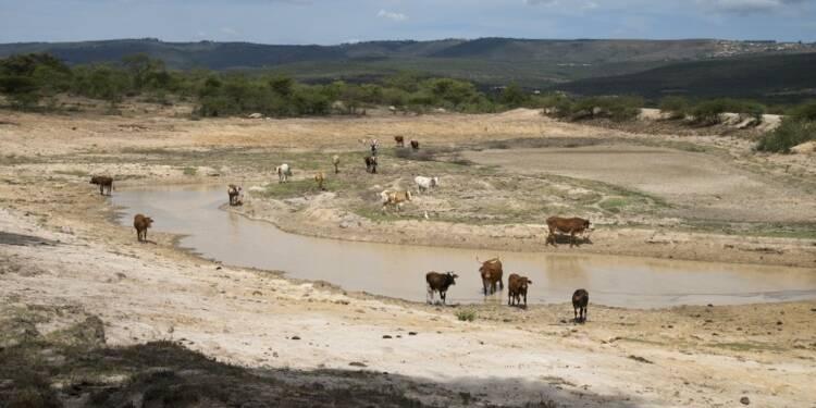 Alerte sur l'aggravation de la sécheresse en Afrique australe