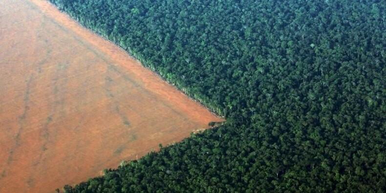 La déforestation en Amazonie en hausse de 16%