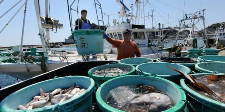 Cinq ans après Fukushima, la radioactivité dans le Pacifique quasi normale