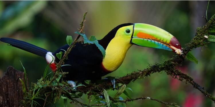 Le Costa Rica, paradis vert et modèle pour la COP21
