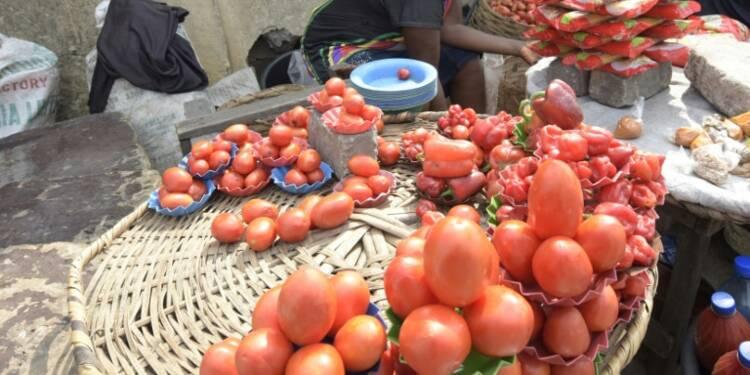"""Le Nigeria face à """"l'apocalypse de la tomate"""""""