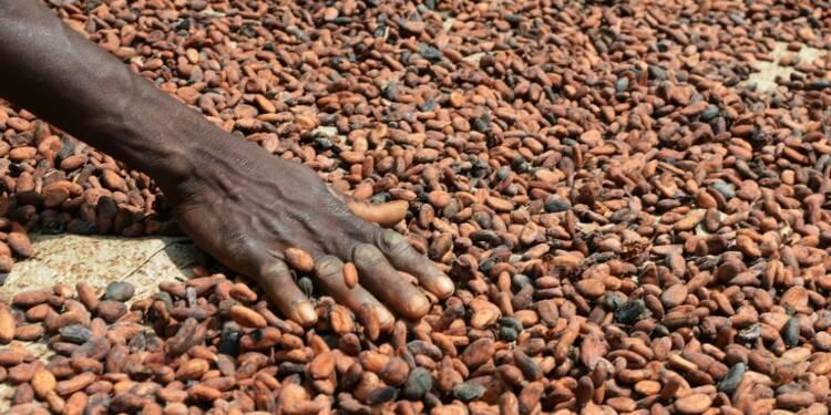 Côte d'Ivoire: accord entre un chocolatier français et les producteurs pour une cacaoculture durable