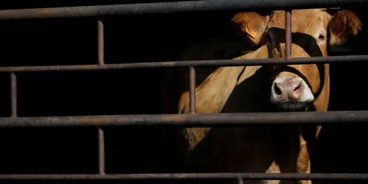 Appels à réduire le recours aux antibiotiques dans la viande