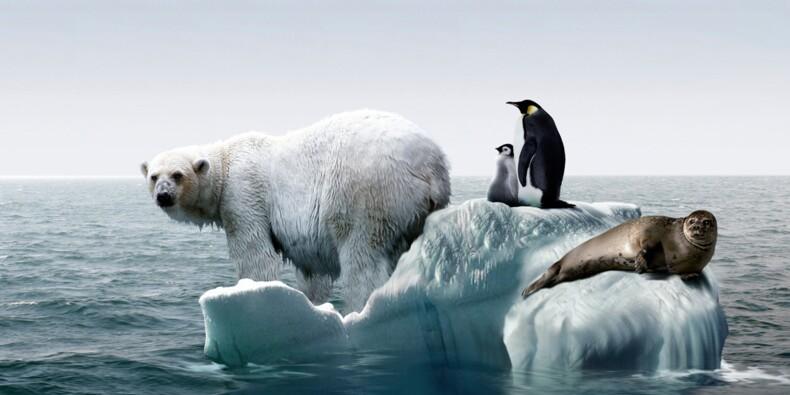 Arctique : après le dégel, le business !