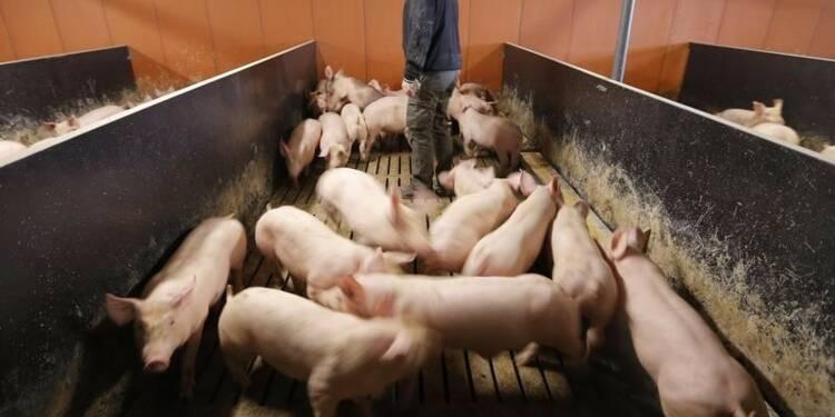 L'UE enquête sur une possible entente dans l'élevage en France