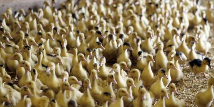Manifestation contre les mesures prises sur la grippe aviaire