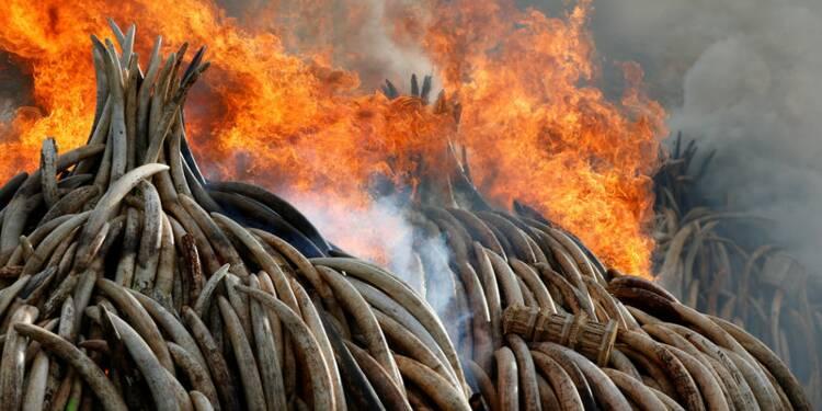 Le Kenya détruit un vaste stock d'ivoire