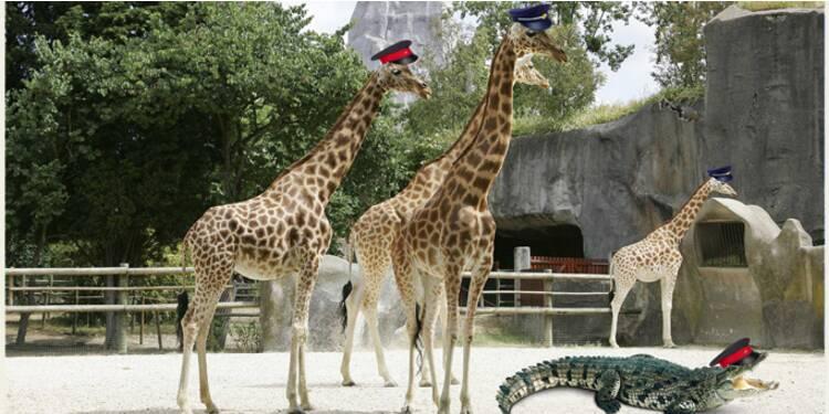 Fonctionnaires : et si on les recrutait au zoo ?