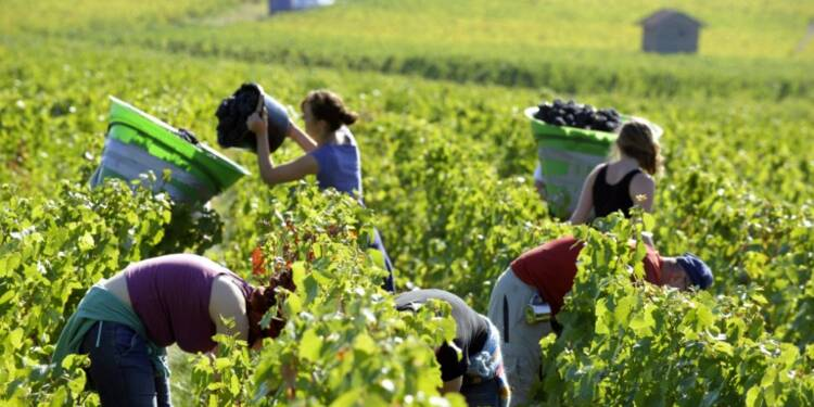 Entre 500.000 et 700.000 emplois saisonniers en France, selon une étude