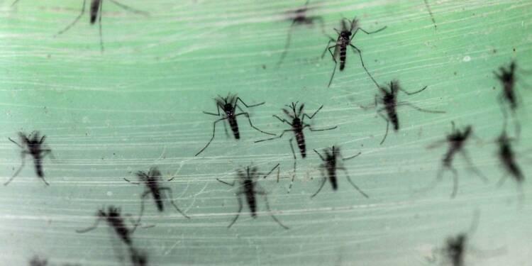 Début d'épidémie du virus Zika en Martinique et en Guyane