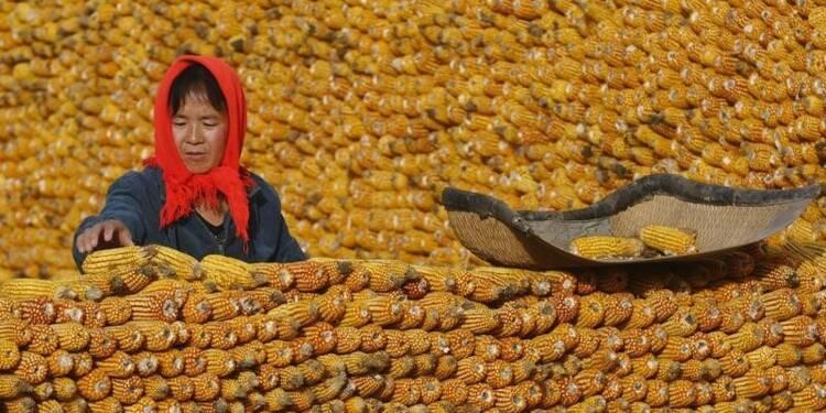 La Chine songe à baisser le prix du maïs pour réduire les stocks