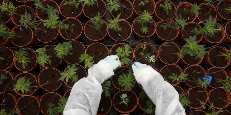 """Jean-Marie Le Guen pour une autorisation """"sélective"""" du cannabis"""