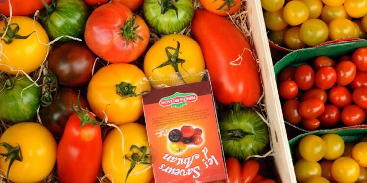 Les tomates, reines des étals : des prouesses génétiques vendues à prix d'or