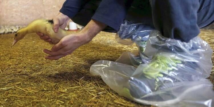 Une aide de 290 millions d'euros pour les agriculteurs