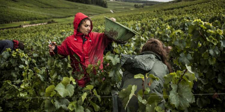 En Champagne, l'inspection du travail vendange les emplois