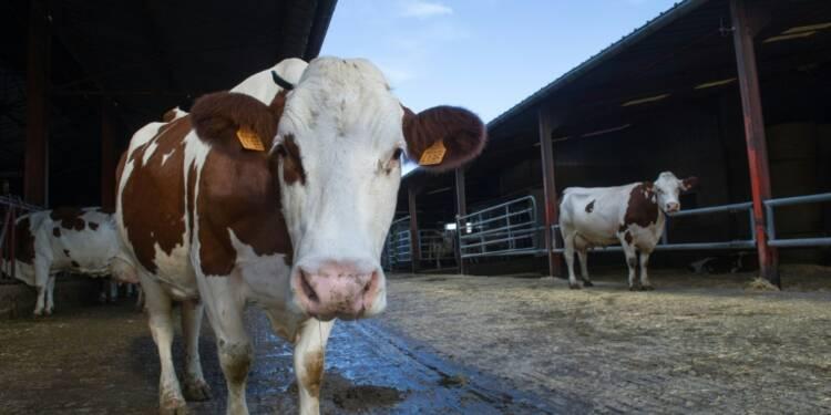 Cours du lait trop bas: Lactalis dans le collimateur des producteurs