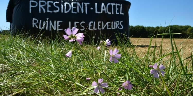 Lait: une crise mondiale qui a des conséquences importantes en France