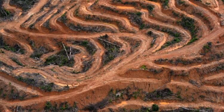 """Huile de palme: l'Assemblée modère la """"taxe Nutella"""" après les protestations de l'Indonésie et la Malaisie"""