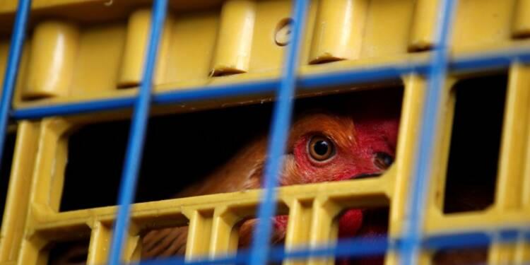 La grippe aviaire s'étend à la Haute-Vienne