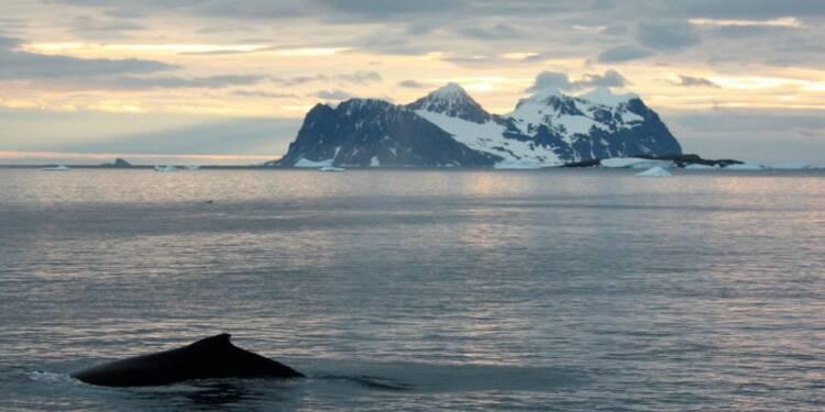 Le Japon va reprendre la pêche à la baleine dans l'Antarctique