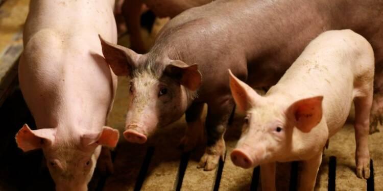 Vers un nouveau plan pour la filière porcine bretonne